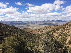 Take a hike: Deep into the desert forest around Dayton