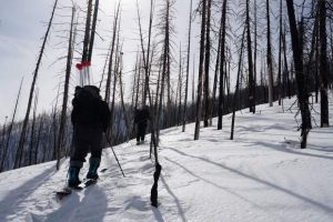 Study shows forest fires accelerating snowmelt across western US