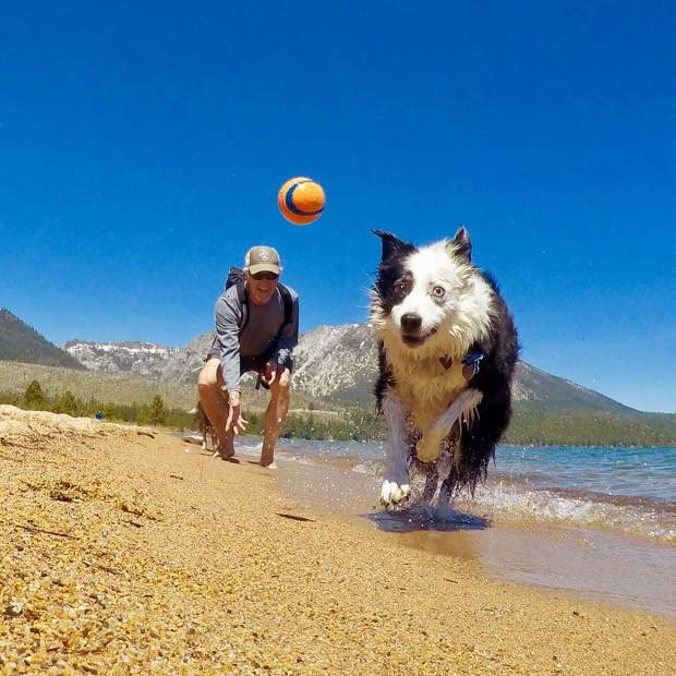 Old dogs still want to have fun. Almost thirteen and slowing down but the enthusiasm is still at eleven. #bordercolliesofinstagram #bordercollie #olddogs #fundogs #goprodogs #tahoefun #tahoedogs #tahoesouth #tahoesnaps