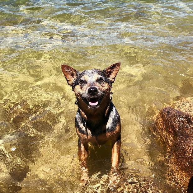 The happiest little water dog