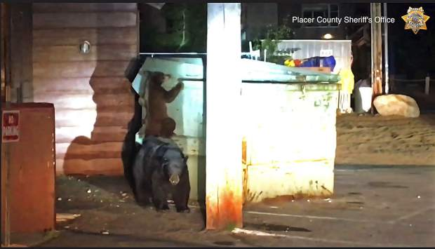 Deputies rescue wailing bear trapped in dumpster at Lake