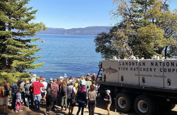 Hundreds gathered Saturday to watch Lahontan cutthroat trout being released into Lake Tahoe.