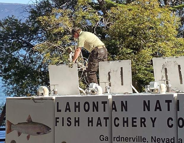 Getting ready to release Lahontan cutthroat trout into Lake Tahoe.