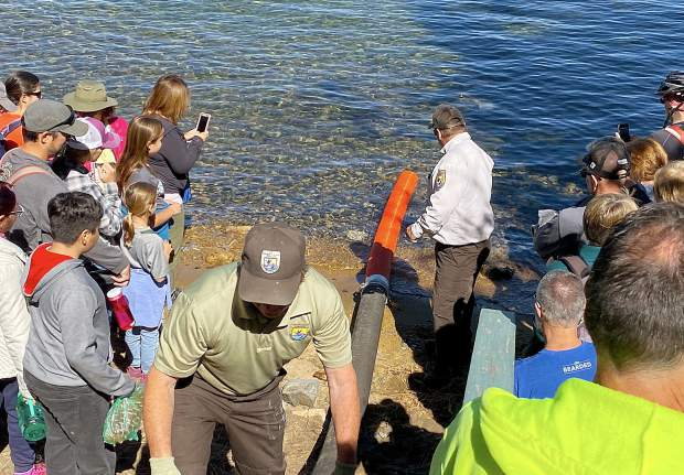Officials prepare to release Lahontan cutthroat trout Saturday into Lake Tahoe.