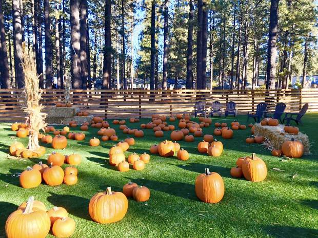The Hangar at South Lake Tahoe opens pumpkin patch the weekend