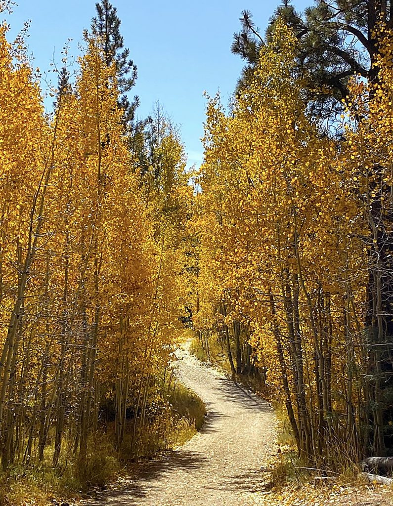 The hike begins with a splash of yellow.