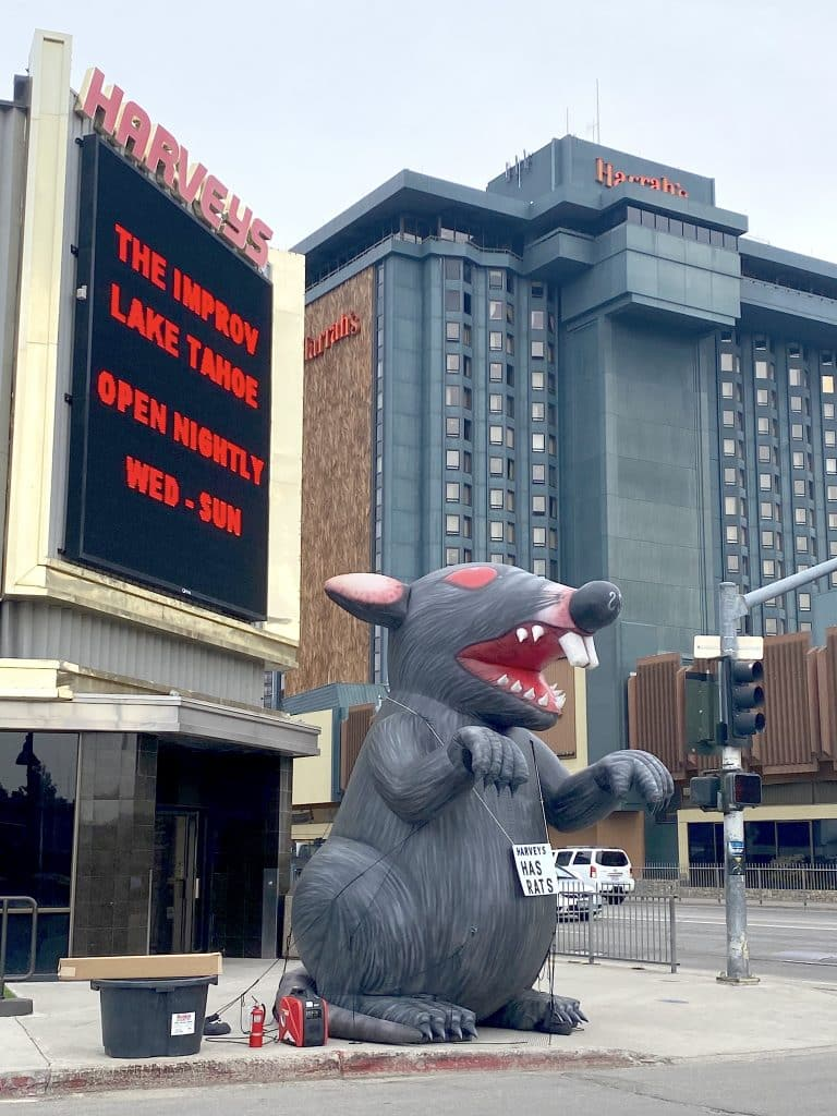 A laborers union protests with a giant inflatable rat Friday in front of Harveys Lake Tahoe.