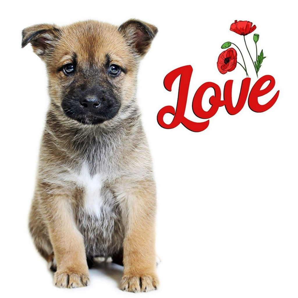 Love is one of the 11 puppies that will go up for adoption on May 5 during HSTT's