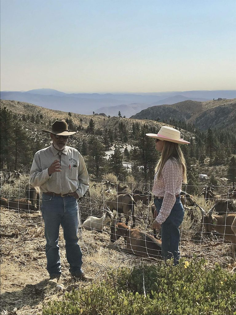 Denton and Shari Cook own High Desert Graziers and the 350 goats.