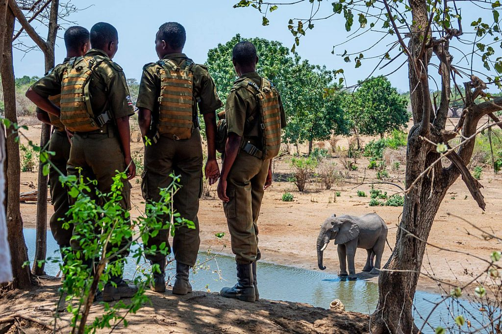 Zimbabwe - Akashinga Rangers with elephant at watering hole.