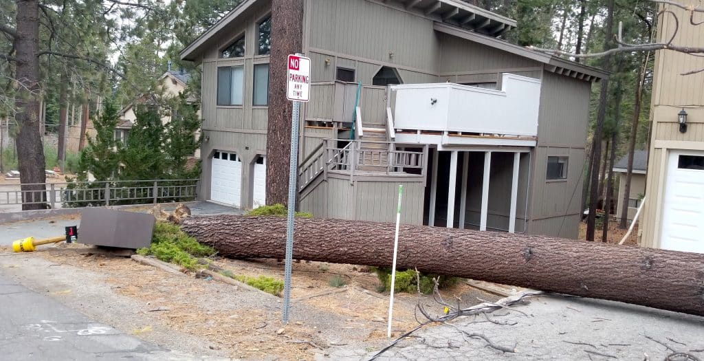 The strong wind Tuesday toppled a large pine tree near Himmel Haus in South Lake Tahoe.
