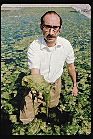 Charles Goldman, 90, has spent his life studying algal growth.