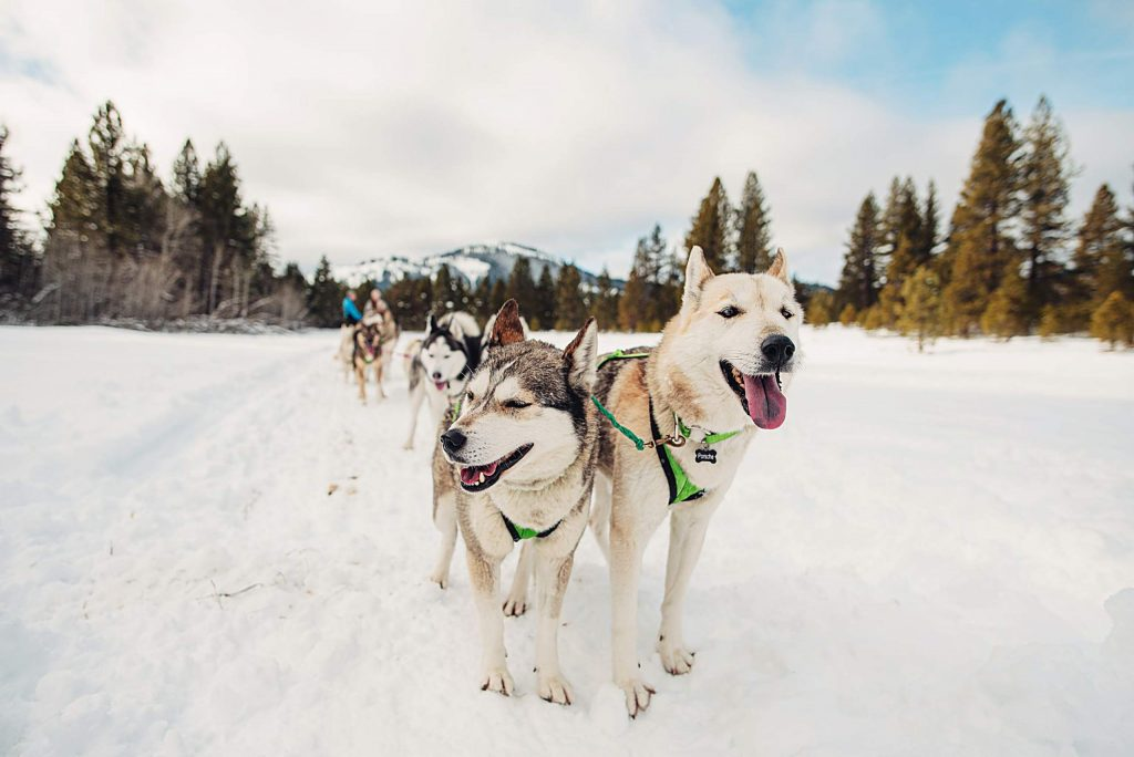 Martin and Buser both grew up loving sled dogs and learning how to lead.
